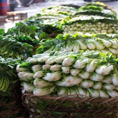 鹤山蔬菜配送如何做好蔬菜配送服务